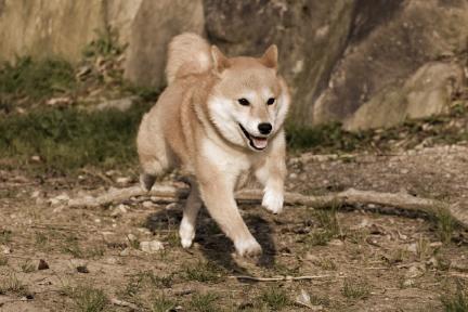 犬イメージ01