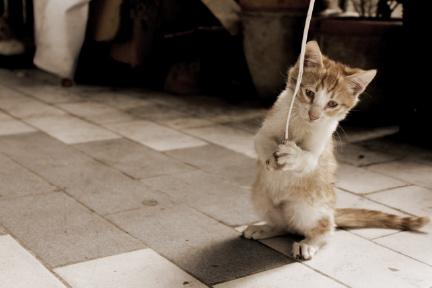 猫イメージ01