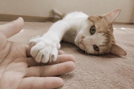 猫イメージ02